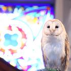 フクロウが指輪を運ぶアウルセレモニー